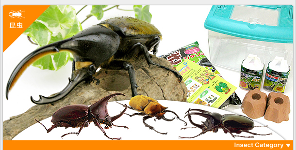 昆虫用トップページ