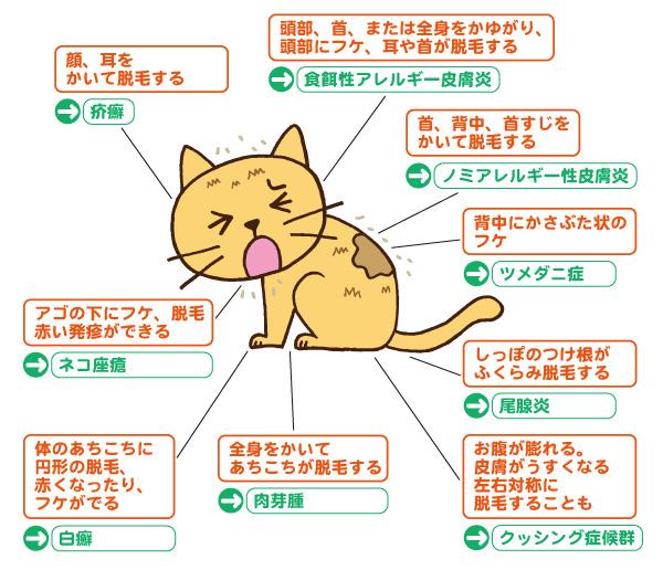 猫カビ お腹