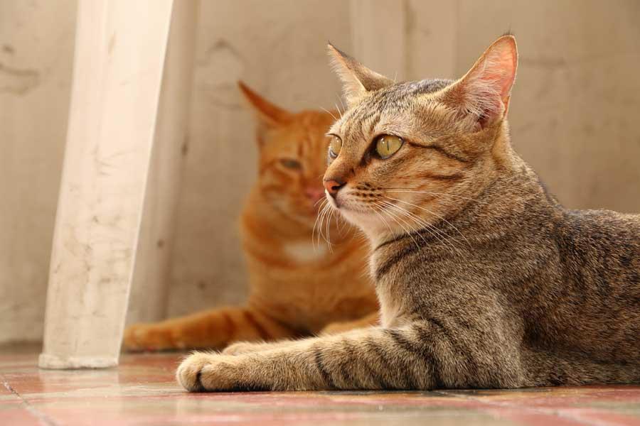 Feline Natural フィーラインナチュラル