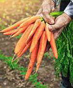 遺伝子組み換えでない野菜・果物