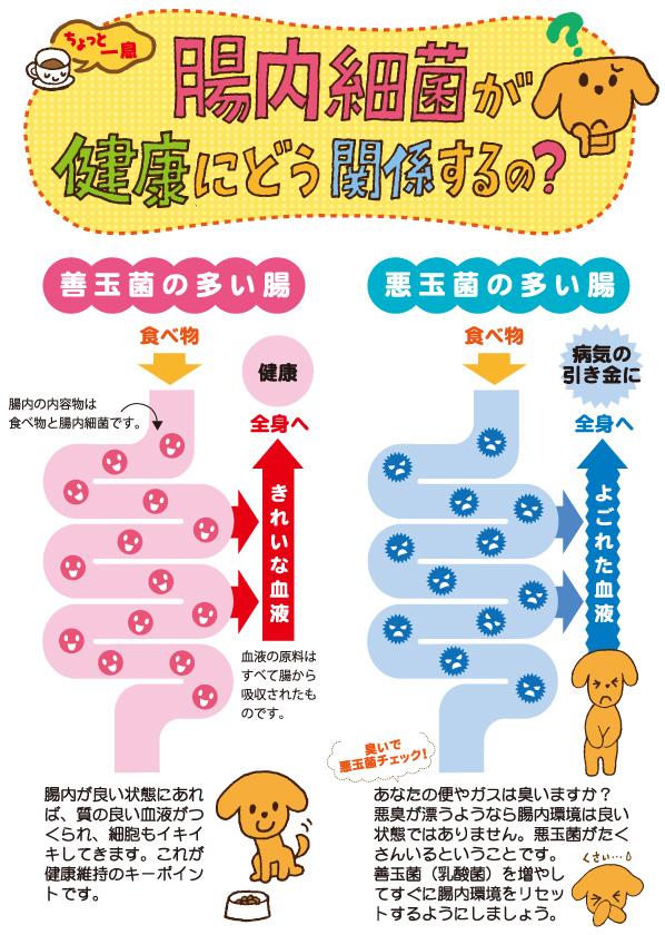 ちょっと一息「腸内細菌が健康にどう関係するの?」