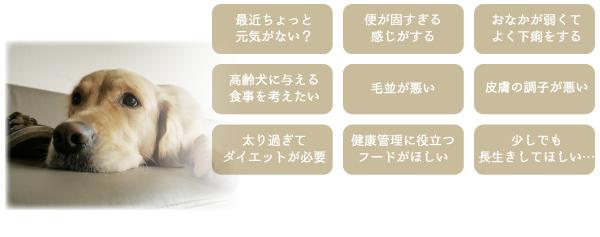 犬好生活 毎日活力 【発酵野菜パウダー】