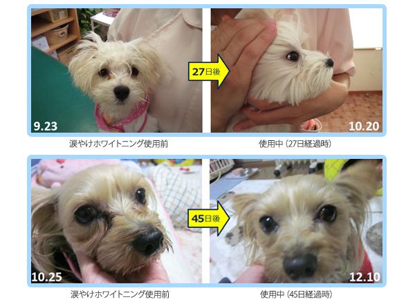 犬がホウ酸団子を食べた・なめたときの症状と対処 …