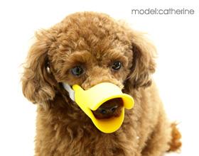 quack クァック