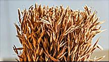 原材料穀類