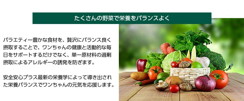 ソルビダ たくさんの野菜で栄養をバランスよく