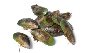 Zealandia ジーランディア ドッグフード 緑イ貝